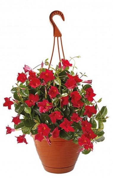 Blumenampel Blumentopf mit Hänger Durchmesser 26 cm Terrakotta